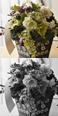 花のギフト セレクトフラワーショップコンセプト インテリアグリーン
