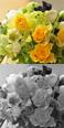 花のギフト セレクトフラワーショップコンセプト お見舞いのお花